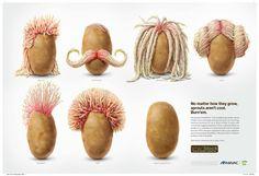 sprout illustration - Sök på Google