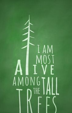 Tall trees reach for the heavens