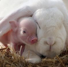 Piglet and Bunny