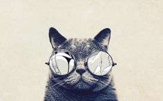 Cat with cool sunglasses HD Wallpaper