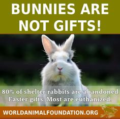 Bunnies are not gifts!