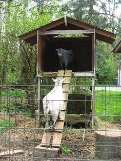 Raised Goat House Hay Bin Feed Trough Below Planking Up On Blocks To Keep Wood From Wet Rot I Would Anchor Ramp Better Make More Secure And