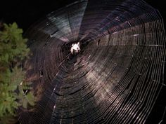 cool spider webs | Liberal Street Fighter