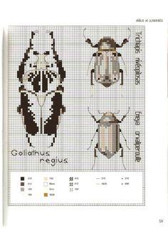 Gallery.ru / Фото #65 - MARABOUT Insects - tatasha