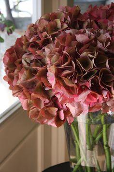 hydrangea antique dark pink
