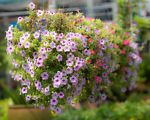 How to Make a Hanging Basket Flower Ball