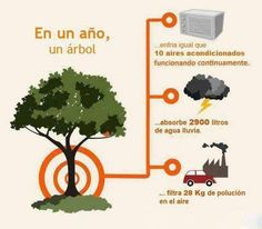 In a year, a tree: cools the amount of air as ten air conditioners running continuously. Absorbs 2900 liters of rain water. Filters 28 kg of air pollution. Ap Spanish, Spanish Class, Environmental Graphics, Sustainable Development, France, Cool Photos, Herbs, Instagram Posts, Google