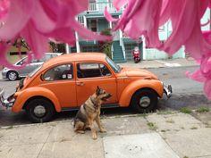 MisterB, Orange Bug Framed By Pink