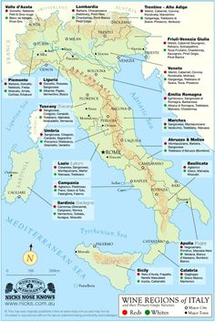 Italy Wine Regions Map - designed by Nicks Wine Merchants in Australia. This Italy Map shows type of wine produced in each region including the Piedmont region where Turin is located. Pinot Noir, Wine Names, Wine Education, Wine Guide, Regions Of Italy, Wine Wednesday, Learning Italian, Italian Wine, Italian Drinks