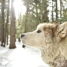 """""""Until one has loved an animal, a part of one's soul remains unawakened."""" - Anatole France"""