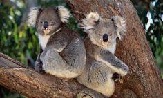 the original treehuggers - literally!!!