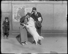 File name: 08_06_000918  Title: Pretty actress steps forward with valuable dog for Salvation Army drive.   Creator/Contributor: Jones, Leslie, 1886-1967 (photographer)   Date created: 1919   Physical description: 1 negative : glass, black & white ; 4 x 5 in.  Genre: Glass negatives   Subjects: Dogs; People   Notes: Title and date from information provided by Leslie Jones or the Boston Public Library on the negative or negative sleeve.  Collection: Leslie Jones Collection  Location: Boston…