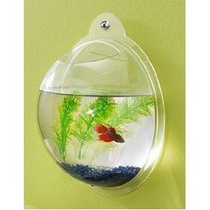 Wall Mount Fish Bowl Aquarium Tank Beta Goldfish. cute for kids room
