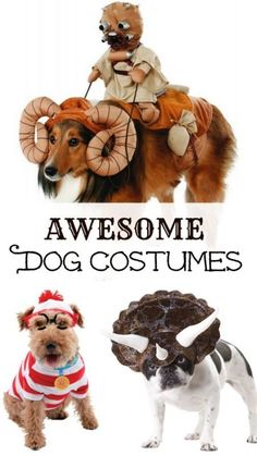 Dogs are such good sports and some (like mine!) love to get dressed up. 14 awesome dog costume ideas for Halloween. Pet Halloween Costumes, Pet Costumes, Halloween Fun, Dog And Owner Costumes, Costume Ideas, Dog Crafts, Animal Projects, Crazy Dog, Best Dogs