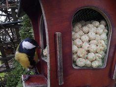 Linnukaamera: rasvatihane