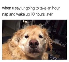 Dog Memes That Will Keep You Laughing For Hours - 6 #funnydogpictures