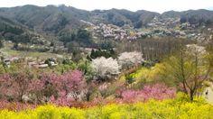 65:「4月5日に花見山に行きました。いろいろな花がほぼ満開で綺麗でした。幸せになる鐘を鳴らして、撮影しました。」@福島県福島市花見山公園