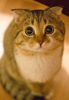 My cute kitten!