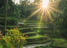 Tegalalang Rice Terraces – Ubud, Bali