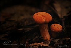 Tiny Toadstools by JoeyCulver1