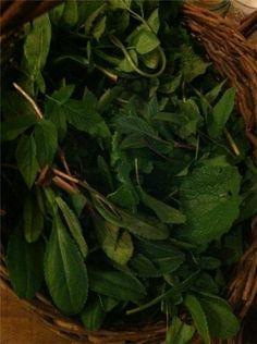 Forage Fine Foods - Wild Spring Greens salsa