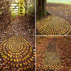 Leaf rings, ephemeral art
