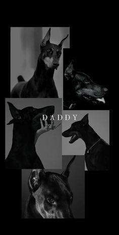 Look Wallpaper, Black Aesthetic Wallpaper, Disney Wallpaper, Cartoon Wallpaper, Iphone Wallpaper, Doberman Pinscher Dog, Doberman Dogs, Dobermans, Animals And Pets