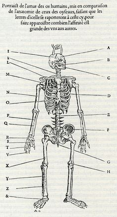 Bernardino Genga - Charles Errand, Anatomia,  Roma 1691, grabado del pre-frontispicio  Desde los inicios del siglo XVI  la anatomía fue uno ...