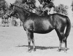 Dustwhirl by Sweep out of Ormonda by Superman.  By cover of Blenheim II she gave birth to Triple Crown winner Whirlaway. She also had a fine multiple stakes winner in Reaping Reward by Sickle.