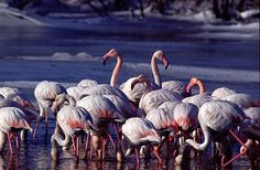 Flamingos' habitat in Evros. Greece