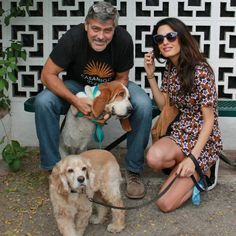 Pin for Later: George and Amal Welcome an Adorable New Addition to the Family