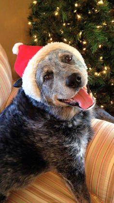 Otis, Precious Christmas Cheer ~•♡•~