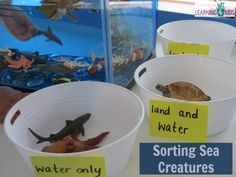 Sorting Sea Creatures - Underwater Zoo Land Only, Water and Land and water only