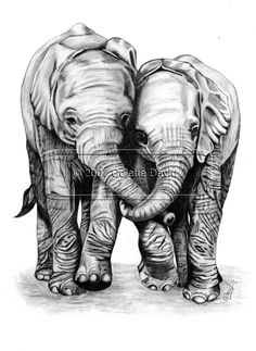 Graphic Pencil Drawing of A Playful Elephants. £5.00, via Etsy.