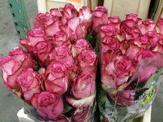 #Rose # Ecuador #Clown  Available at www.barendsen.nl