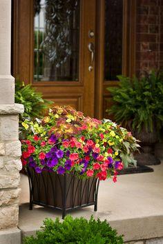"""Beautiful garden container. For 14"""" container 1 ColorBlaze Dipt in Wine Coleus, 1 Supertunia Red Petunia, 1 Supertunia Mini Blue Petunia, and 1 Superbells Yellow Calibrachoa. Full sun."""