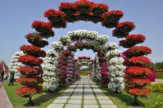 Dubai Miracle Garden in the UAE - Stock Photo , Most Beautiful Gardens, Beautiful Flowers Garden, Prettiest Flowers, Backyard Garden Design, Backyard Landscaping, Garden Soil, Garden Art, Big Garden, Dubai Garden