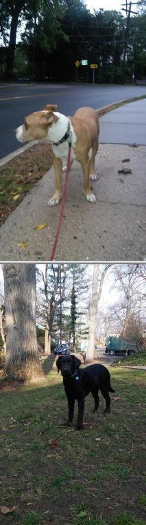 Jill's Dogwalking and Petsitting Service - Port Chester, NY In Home Pet Sitting, Port Chester, Pet Trainer, Pet Sitting Services, Pet Dogs, Pets, Dog Walking, Pet Care, Dog Training