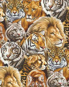 Big Cats - Wild Pride - Auburn