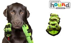 "Dog owners and pups will love this deal: ""Extreme Seam Invincible Snake"" as featured on doggyloot.com"