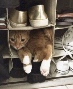 Cats in the parking lot – 28 Funny Pictures