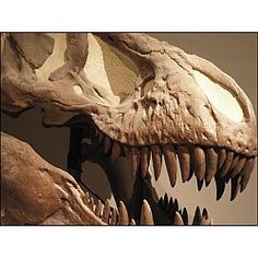 Hall of Geology and Paleontology at Texas Memorial Museum Austin, TX #Kids #Events