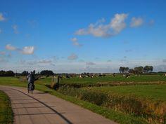 Weiland met koeien bij Dronrijp Friesland