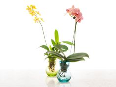Lovely orchids in recycled glass bulb vases.