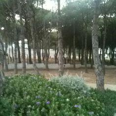 La paz de La Fosca....I love it