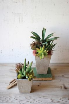 Artificial succulents will add charm to any display. Latex rubber faux plants in gray paper mache pots. Artificial succulents are sold two per set. Succulent Arrangements, Succulent Pots, Planting Succulents, Planter Pots, Floral Arrangement, Faux Plants, Potted Plants, Container Plants, Container Gardening