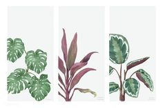 Collection of hand drawn plants isolated on white background www.rawpixel.com