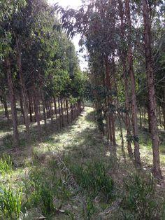 finca turistica ganadera forestal olivicola en las sierras de minas uruguay casa rustica de campo olivos del plata uruguay pinterest