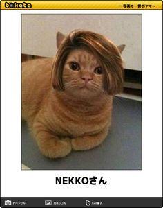 NEKKOさん…あなたをきっと笑わせる元気の出る「猫の傑作ボケて」15選