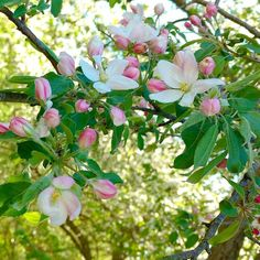 Spring Sign, Spring Blossom, A Perfect Day, Bloom, Birds, Seasons, Flowers, Plants, Painting
